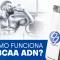 ¿Cómo funciona el BCAA de ADN?